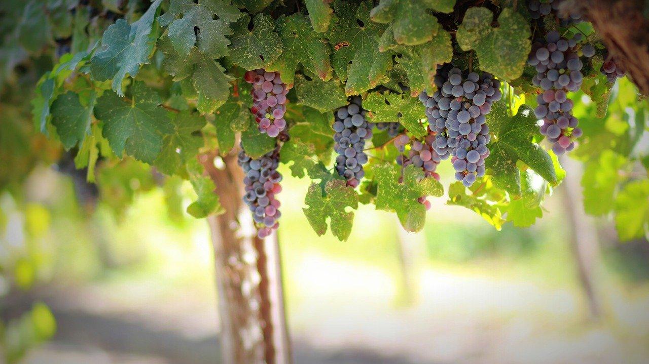 Visita in una cantina di vino della Val d'Itria