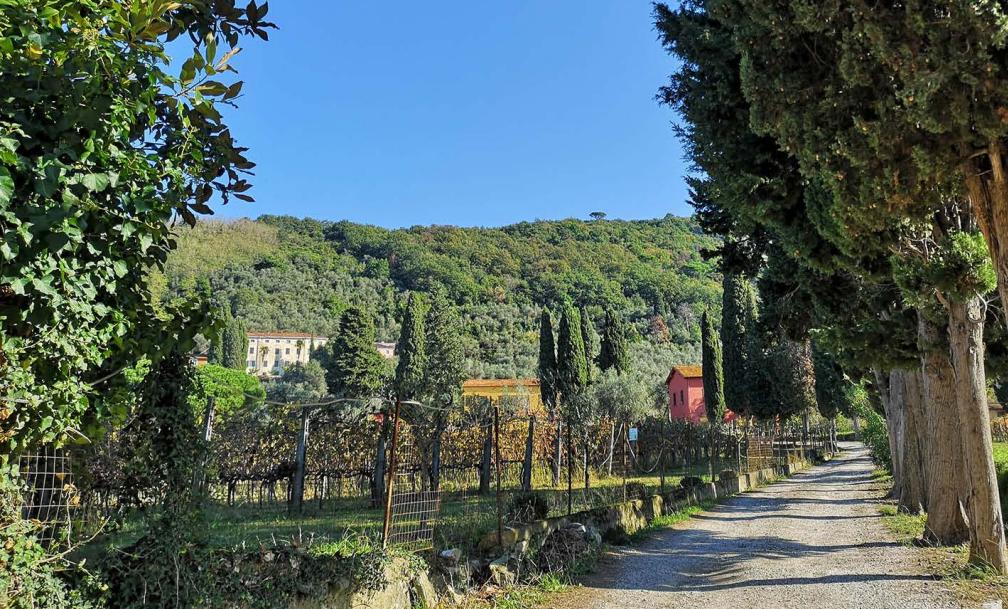 Visita ad una tenuta storica e degustazione di vini e prodotti bio
